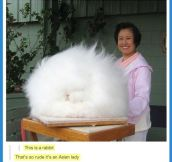 This is a Rabbit