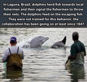 Good guy dolphins…