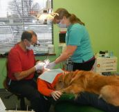 Dog helps little boy get over his fear at the dentist…
