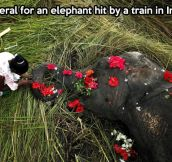 Nice to see the respect paid to such an intelligent creature…
