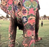 In India the elephant is a treasure, and sometimes also a work of art…