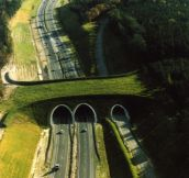 Wildlife bridge in the Netherlands…