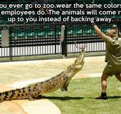 Next time you go to the zoo…