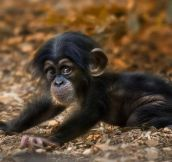 Just a cute little monkey…