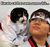 Karate cat…