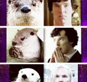 Benedict Cumberbatch otter resemblance…