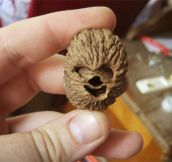 A walnut that looks like Chewbacca…