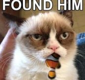 Grumpy Cat finds Nemo…