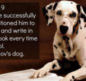 Pavlov's dog…