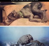 AT-AT dog fall…