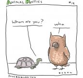 Problems in animal communication…