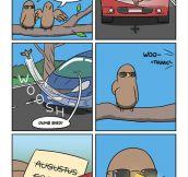 Dumb bird…