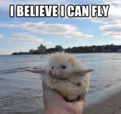 You go Albino Hedgehog…