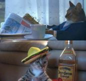 Cat goes on a trip…