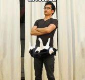 The cat belt…