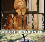 Cat and boat story…