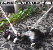 Evil Halloween decorations…