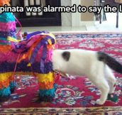 Alarmed Piñata…