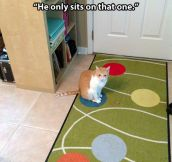 Very picky cat…