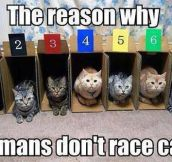 Racing cats…