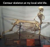 Centaur skeleton…