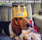 Feed me human slave…