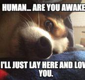 Wake up, master…