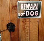Beware of the cuteness…