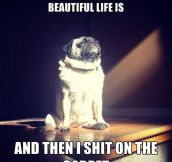 Enlightened dog…