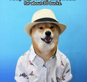Dog on vacation…