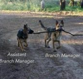 Branch manager…