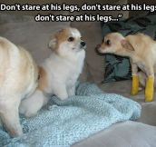 Don't stare at his legs…