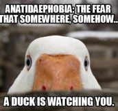Anatidaephobia…