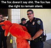 What the fox said…