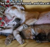 The fox and the hound, featuring a new character…