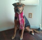 Hipster canine…