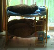 Bunk bed for cats…