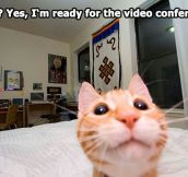 Kitty wants to chat…