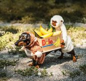 Two monkeys carrying a box of bananas…
