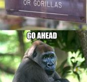 No gorillas….