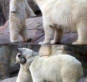 Polar love…