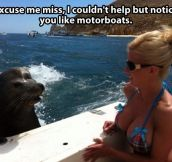 Friendly seal…