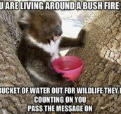 Goes for all the other bush fires in the future!