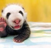 13 Pics of Cute Animals Saying Hi to You Will Melt Your Heart