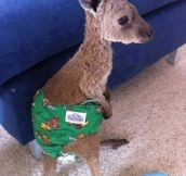 Kangaroo saved from a wildfire. :)