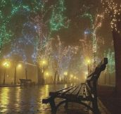Christmas lights in the fog…