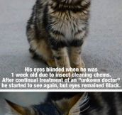 Black Eyes…