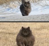 You'll never be as majestic as this cat…