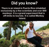 Monkey Island…