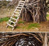 Nest bed…
